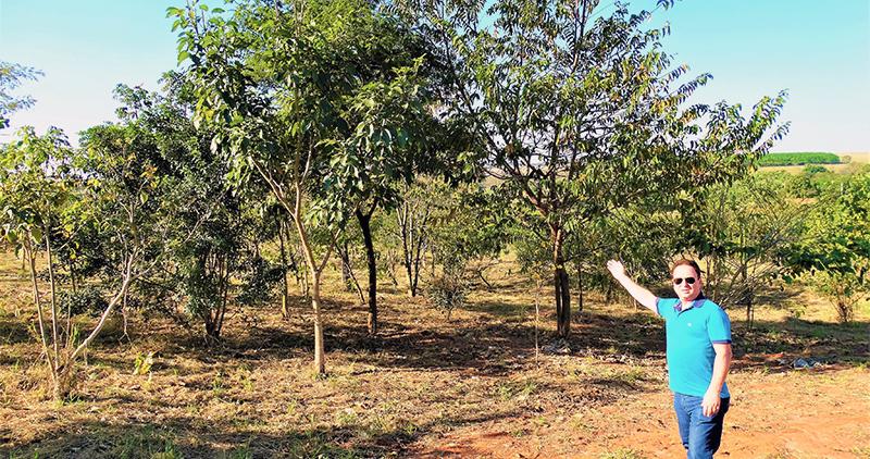 Projeto de reflorestamento do SETH São José do Rio Preto e Região já tem mais de 80 espécies de árvores plantadas
